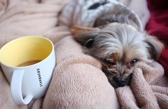 Кофе и собака
