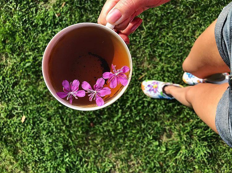 Иван-чай и давление