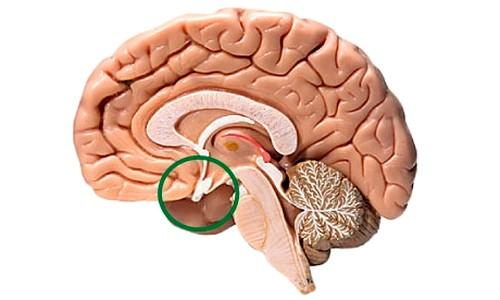 Как вылечить аденому гипофиза головного мозга