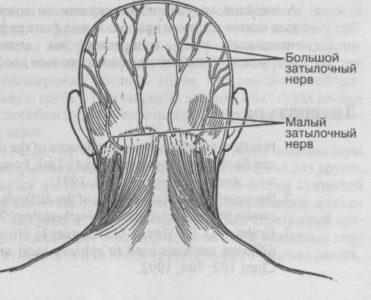 Область поражения невралгии затылочного нерва