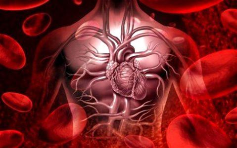 Влияние клюквы на организм